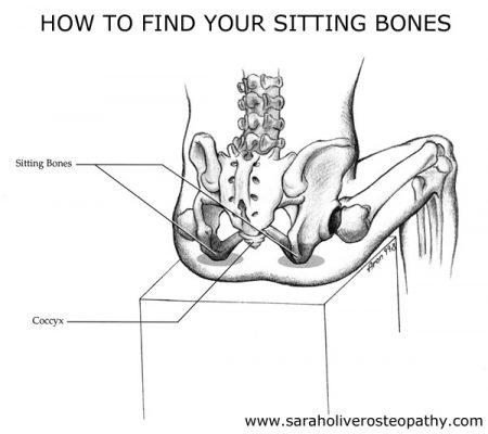 sitting-bones